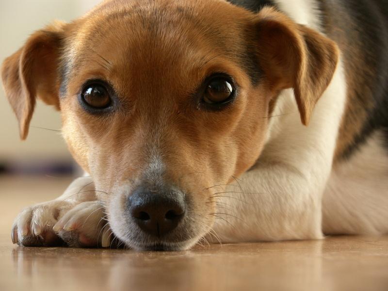 Bild Hundekaufvertrag Hunde