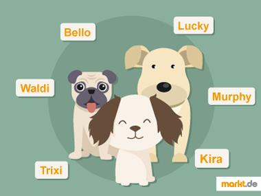Grafik beliebte Hundenamen