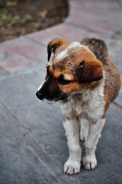 Zugelaufener Hund