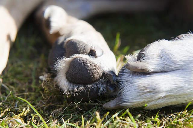 Bild von Hundpfote