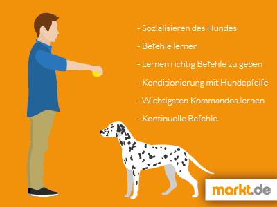 Grafik zur Hundeschule