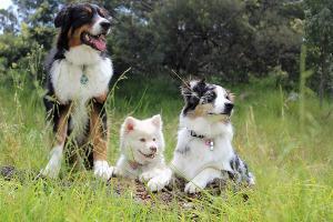 Bild Hundeschule Hunderassen