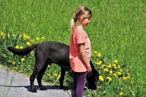 Bild Hundeschule Kind