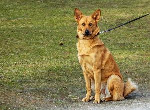 Bild Hundeschule Kommando