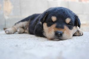Bild Hundeschule für Welpen