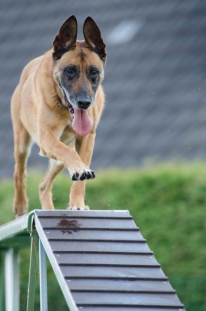 Bild Hundetraining