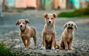 Straßenhunde Welpen