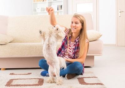 Bild Hund beim Training im Haus