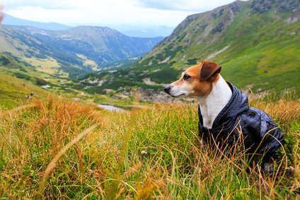 Bild von Jack Russell Terrier