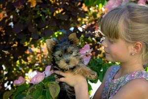 Kind mit Yorkshire Terrier Welpe