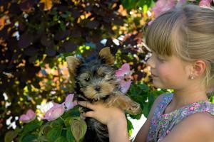 Kind mit Yorkshire Terrier Welpe
