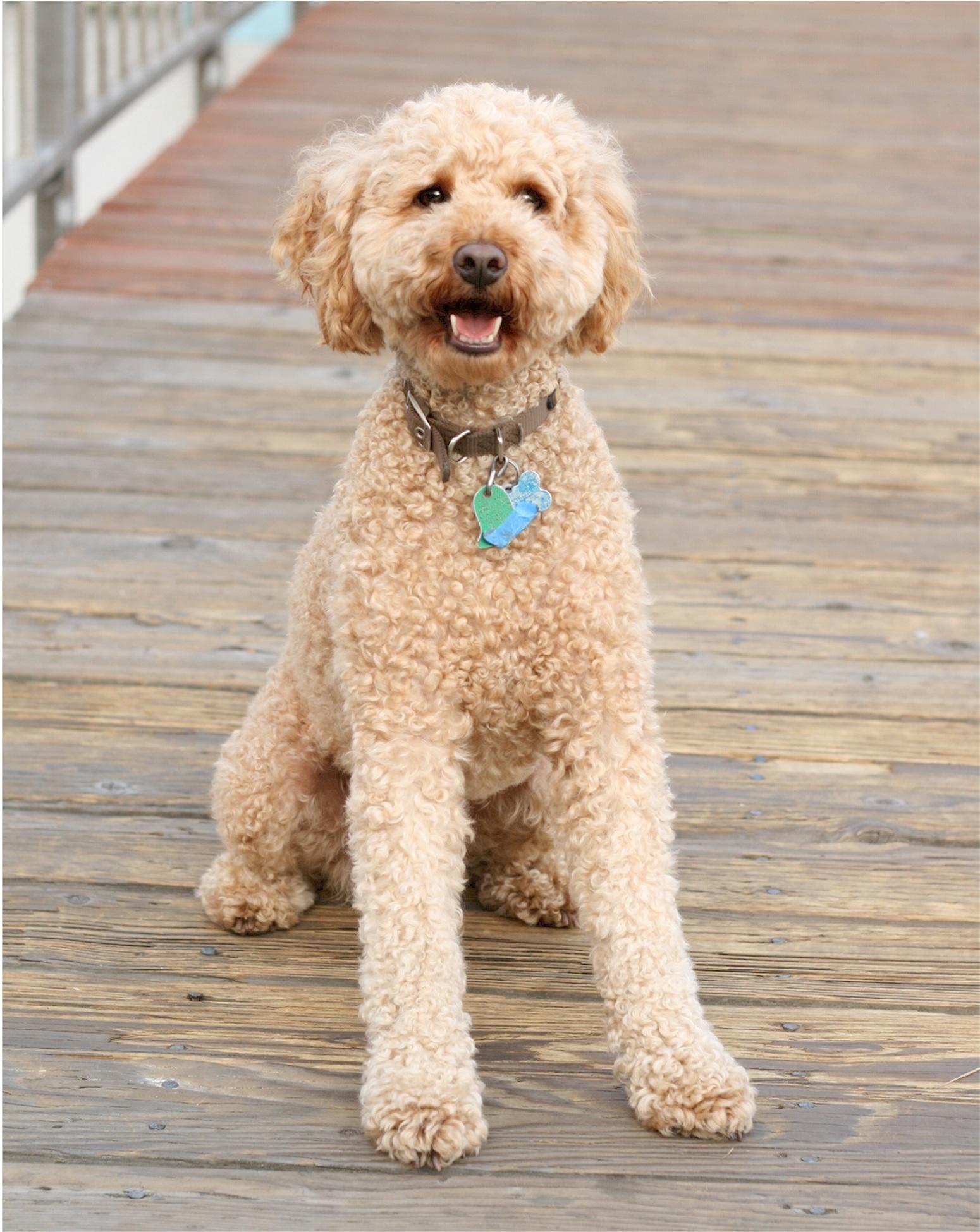 Liebenswert Schöne Hunderassen Dekoration Von Bild Acer Logo