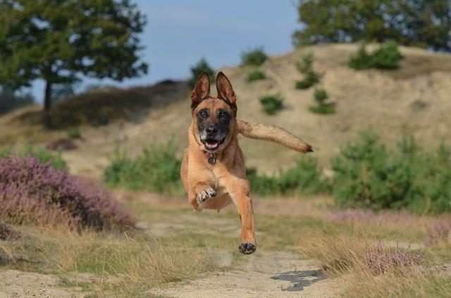Bild laufender Hund