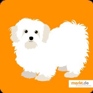 Grafik Malteser Hund