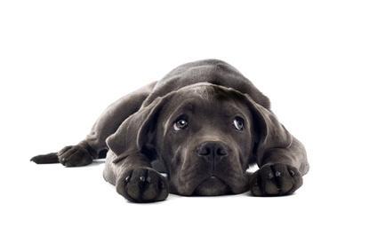 Notfallsituationen beim Hund