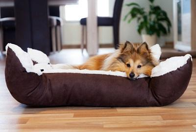 Bild Orthopädische Hundeschlafstelle