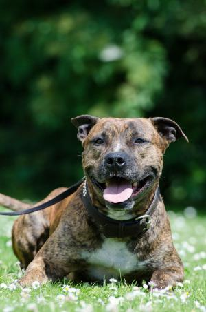 Kampfhunde Welche Hunderassen Sind Verboten Markt De
