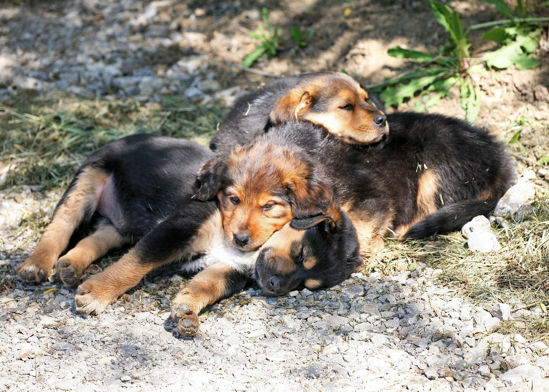 Hundezuchter Vereine In Deutschland A Z Markt De