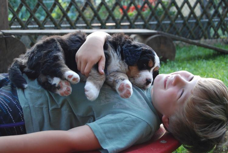Bild Kind mit Großem Schweizer Sennenhund Welpe