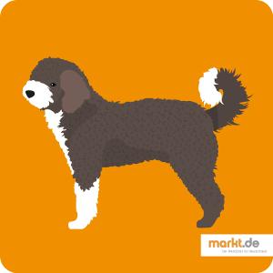 Spanischer Wasserhund: Charakter, Haltung uvm  | markt de