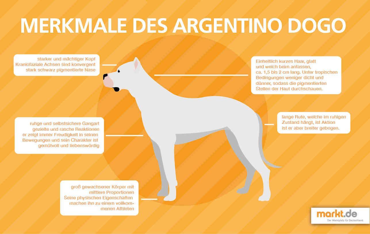Bild von Dogo Argentino