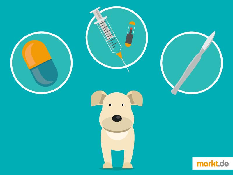 Verhütungsmittel für Hunde