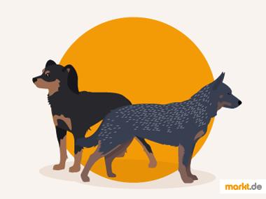 Grafik vorläufig angenommene Hunderassen