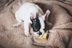 Weihnachstgeschenk Hund
