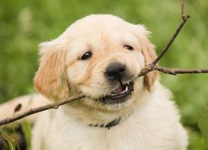 Hundespielzeug Welpen
