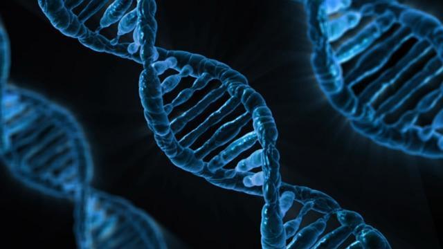 Bild Biologie
