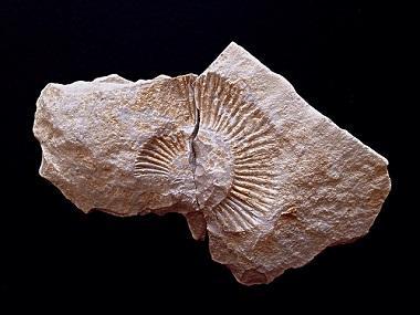 Bild Fossil