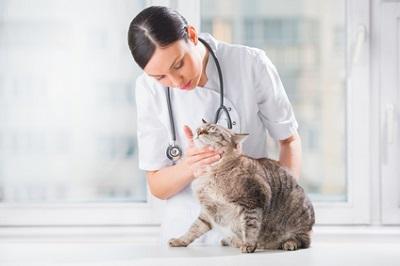 Bild Tierarzt bei der Arbeit