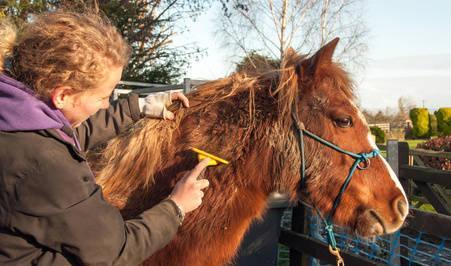 Bild Pferdepflege