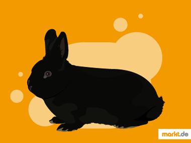 Grafik Alaska Kaninchen Portrait
