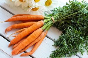 Bild Karotten für Englische Schecken