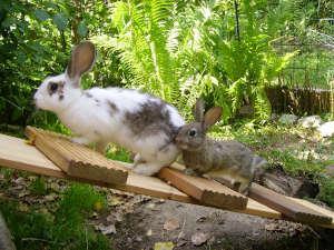 Kaninchen in schattigem Außengehege