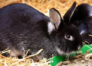 Kaninchen bei Futterschüssel