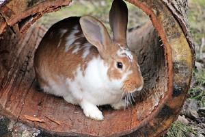 Kaninchen Versteck