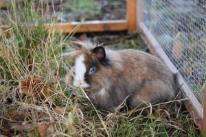 Kaninchen draußen