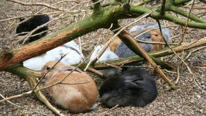 Kaninchen liegen in Erdkuhlen