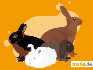 Grafik Kaninchenrassen-Quiz