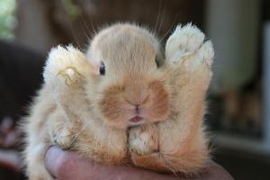 Bild Kaninchenzucht Entwicklung