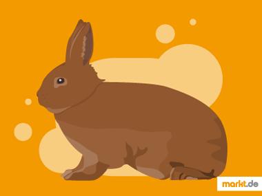 Neuseeländer Kaninchen