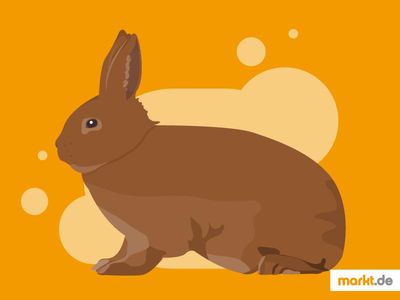031d08d526 Das Neuseeländer Kaninchen gibt es in zwei verschiedenen Farben. (Einfach  klicken zum Vergrößern)