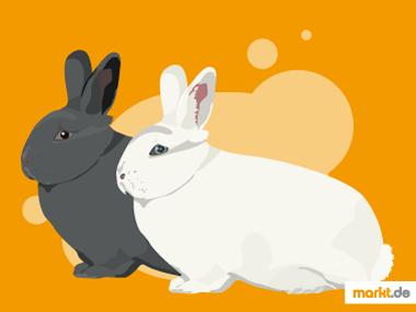 Wiener Kaninchen