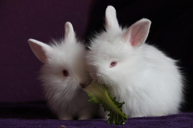 Bild von zwei junge Kaninchen