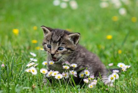 Katze in Blumenwiese