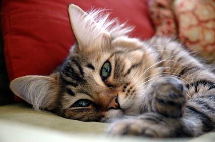 Bild von Katze mit Durchfall