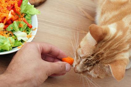 Katze frisst Karotten