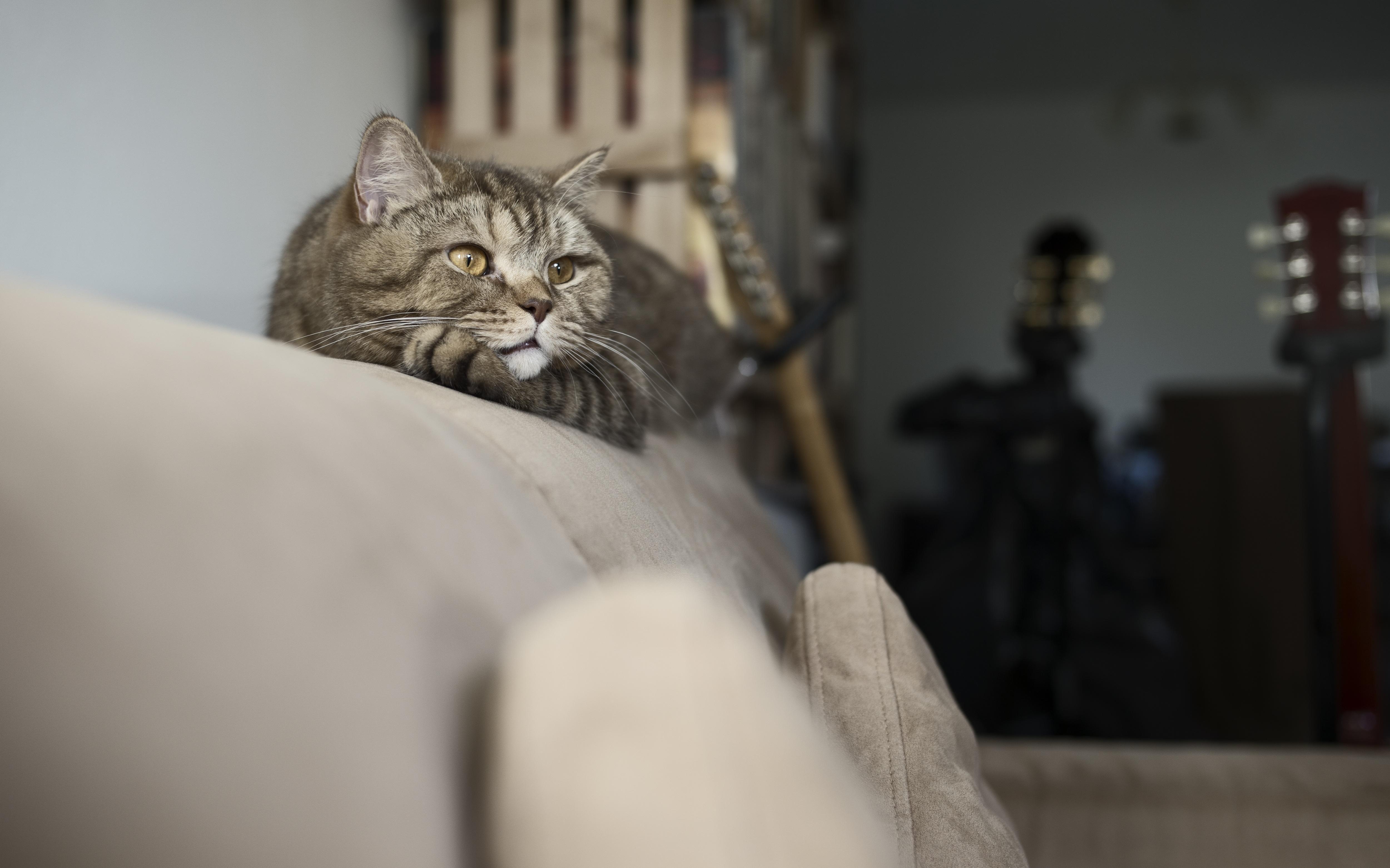 Wenn Die Katze Stark Haart Ursachen Und Tipps Markt De